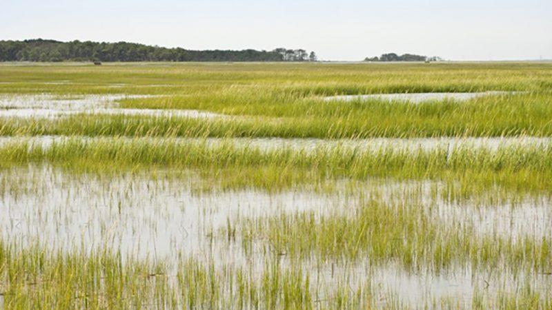 Indiana Group Warns Drainage Bill Puts Wetlands at Risk
