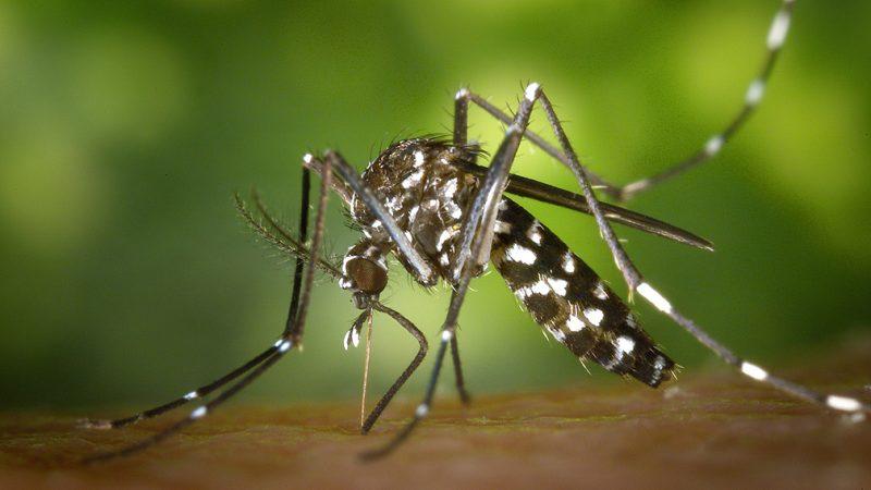 Se ha detectado un virus extremadamente serio en el condado de Elkhart