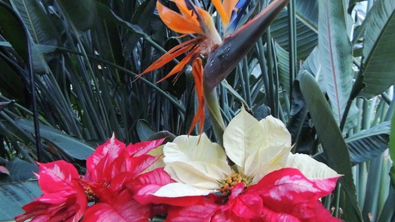 Una visita mágica al Conservatorio Botánico de Fort Wayne
